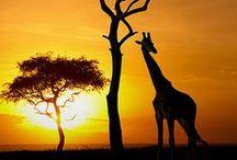 African Safari ✈