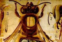 Garden- Bees