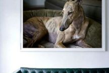 Home Decor / Home decoration made with your pet's portraits.