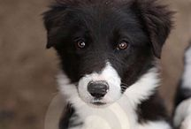 Dogs / by Marleen Stupers