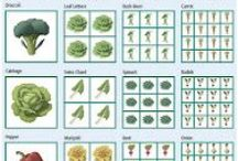 Vegetables - Everything Square Foot Gardening / by Mike Marsee