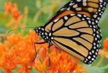 Garden- Nectar and Feeders