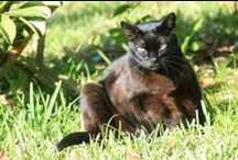 always in our hearts ♥ / sharing some of our cat friends who have left their earthbound lives; gone but not forgotten