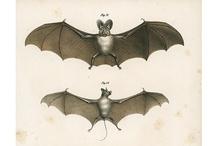 Scientific Illustrations / by Arielle Weiler