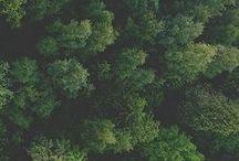 nature. / by Sarah Webster