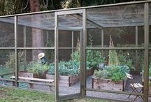 Gardening / Gardening, Growing Vegetables, Growing Herbs, Growing your own food, Natural, Organic, Organic Gardening