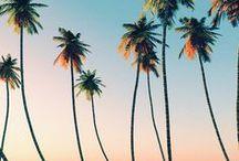 Island Life / Island holidays, tropical, resorts, travel, vacation, summer, palm trees,