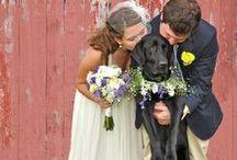 Weddings / by Annabeth
