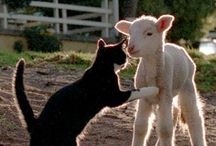 Animals / An animals eyes have the power to speak a great language!