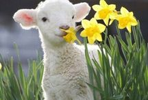 Spring Time/Easter / Easter spells out beauty,the rare beauty of new life.