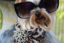 Dogs Eyewear