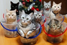 Cute Cat Pix. / This board is full. Now pinning on Cute Cat Pix 2. / by Anne-Marie Bezzina