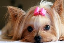"""a """"Dogs Life"""" / FAB Pooches"""