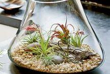 Terrarium & Aeriums / Inspiring uses of succulents and air plants.
