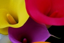 Bloom Blossom