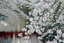 White, my favourite colour