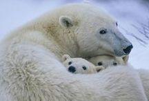 Bears! / by WK Wesley