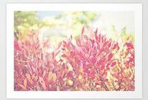 Pics & prints