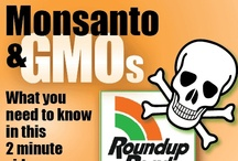 Monsanto and GMO / Please help us in our fight to get Genetically Modified Foods labelled in California. We vote on Prop 37 in November 2012.  Factory Farming and Giant Chemical companies have spent over $25 Million dollars in the last 3 months to defeat this measure. They are just getting started. We can't fight them with dollars.  Our only hope is AWARENESS. If people understood what's going with our food they might demand change. If we change minds, we can change the system.  Tags: GMO's, GMOs, prop37 / by eatlocalgrown.com