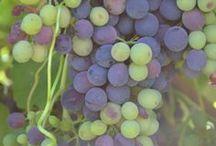 The Home Vineyard