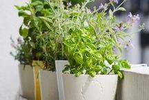 Love to Garden / Garden tips, ideas, & inspiration