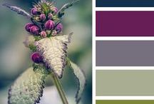 True colors / Il magico mondo dei colori.