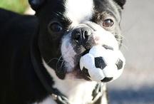 Puppy Love <3 / by MaryLiz LeBoeuf