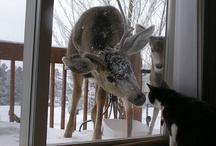 Animals / by Lori Jones