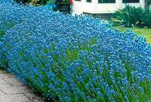 Blue / by Lori Jones