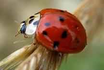 Butterflies ladybugs and bugs / by Lori Jones