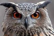 Owl Howl / by Joycee Francisco