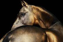 Equine Love / by Lauren Rainaud