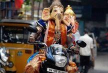 India / by Katarina Brieditis