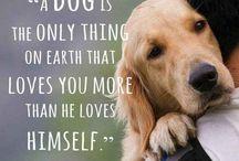 It's a dog's life / by Doug Hosie