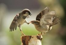 Little Bird love / I so love Birds / by Collette Hicken