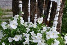 In my garden... / by Collette Hicken