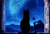 Just Black Cats / by ~bell the cat~