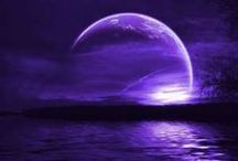 Colour: Purple / by bell the cat