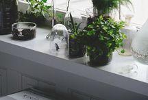 PLANT . B A B Y S
