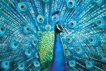 Peacocks / by ~bell the cat~