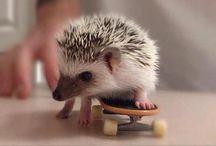 Super cute animals / by Kaz