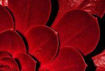 Cor * Vermelhos
