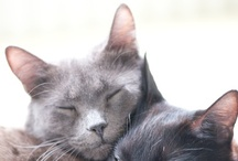 Cats And Other Soft Paws / Cats, Dogs, dears,  / by lebenslustiger