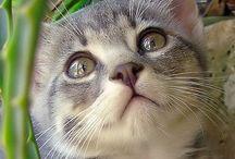 Adorable kitties / by Carrie Kramer