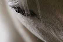 Horses / Horses, photography, nature