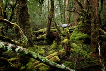 Tasmanian Wilderness / With it's jagged mountains, wild tannin-dark rivers, ancient forests and heath, the Tasmanian wilderness is a place of spectacular beauty, most of it so remote and inaccessible that only the intrepid or foolhardy will ever enjoy its secrets...