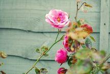 Petals Everywhere / by Sagra Alvarado Melendez