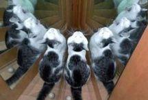 Cats, nonsense & fun / Cats, humor, cats.