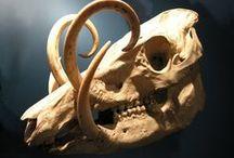 Paleolontology