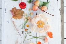 Flowers / Beautiful images of flowers. Blooms. Bouquets. Flower arrangements.